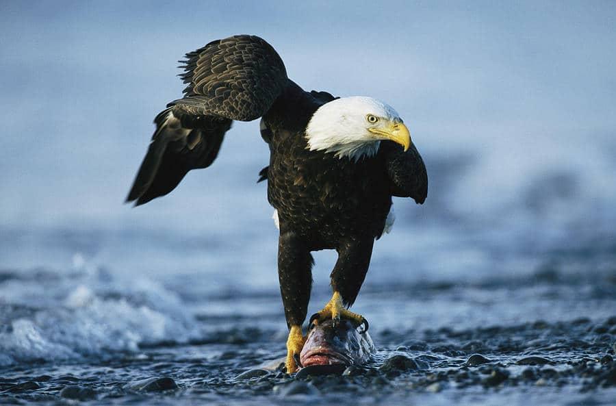 O sumedenie de animale uimitoare trăiesc în împrejurimile Fluviului Mississippi
