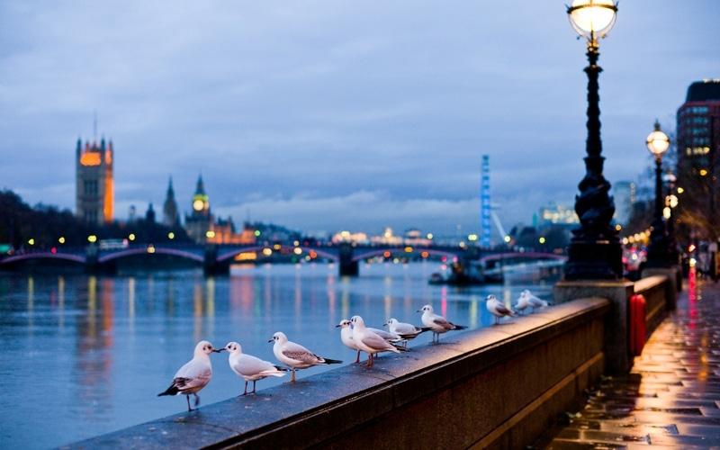 O sumedenie de specii de păsări duc un trai liniştit pe apele râului