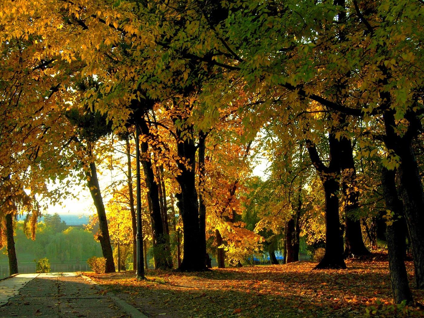 Parcul Herăstrău, într-o toamnă însorită