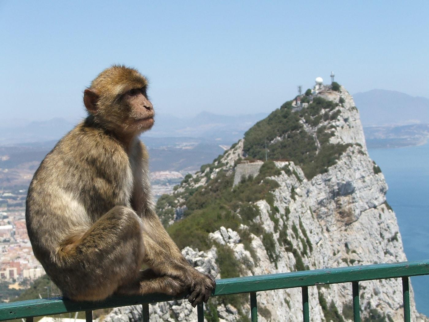 Populaţia de macaci înveseleşte întreaga regiune