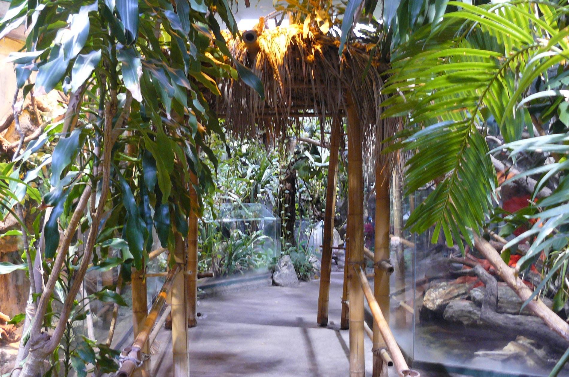Stare Zoo prima grădină zoo a orașului Poznan