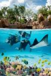 Dolphin Cove at Treasure Reef, locul unde turiștii înoată cu delfini, rechini și pisici de mare