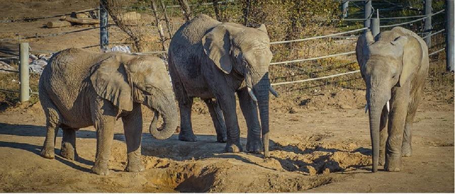 Elefanții din noua Grădină Zoologică din Poznan