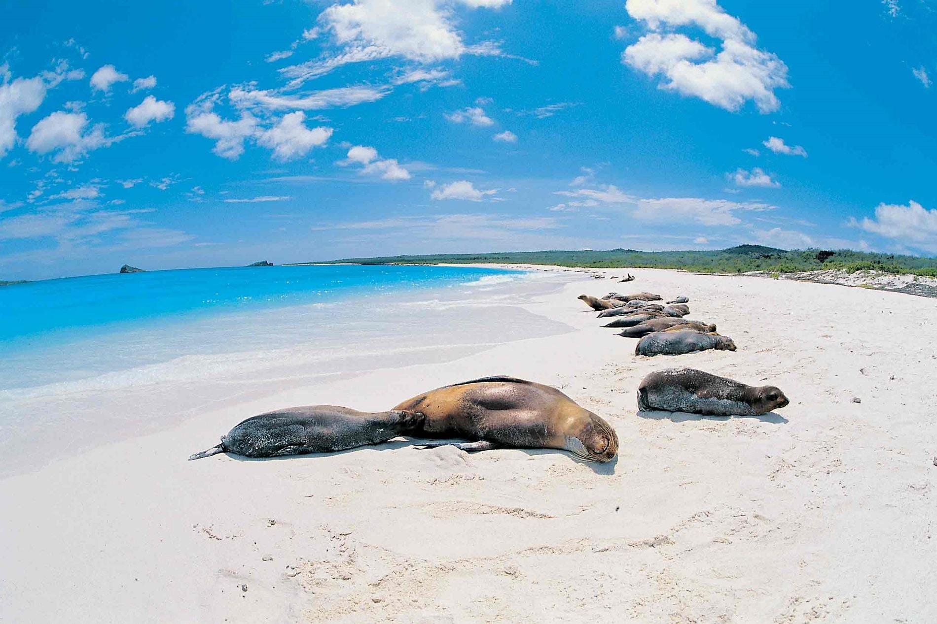 Insulele Gapalagos, declarate parc național găzduiesc sute de specii de animale