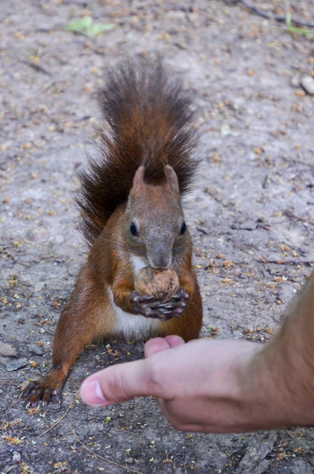 Veverițele jucăuțe îți dau târcoale în Parcul Zoologic Piatra Neamț