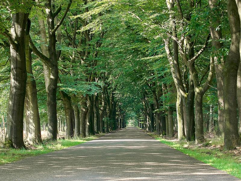 Alei magnifice în Hoge Veluwe National Park