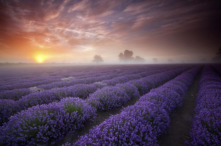 Cele mai spectaculoase locuri din lume - câmpurile de lavandă