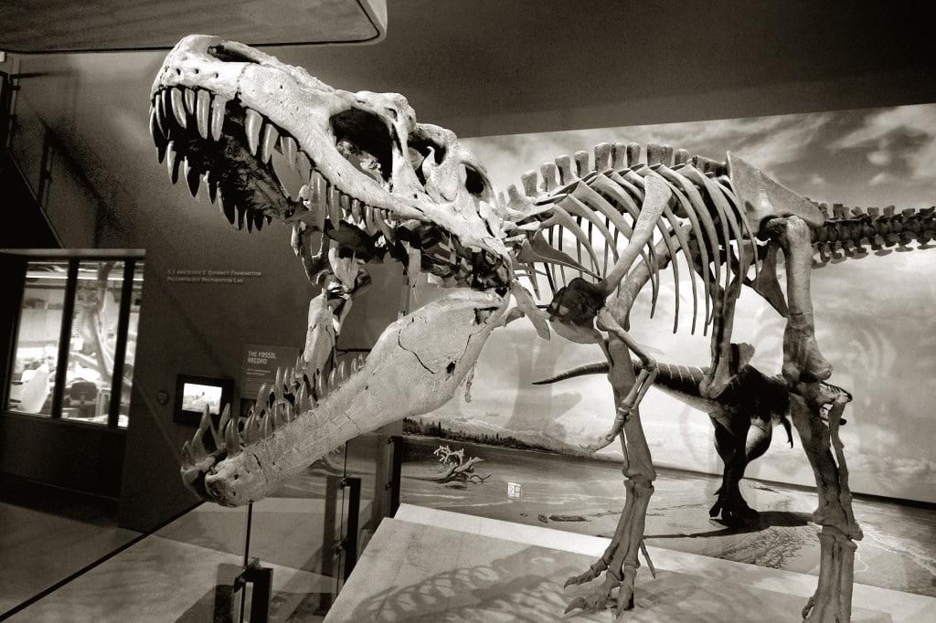 Dinozauri la muzeul orașului