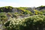 Exemple superbe de floră din această regiune