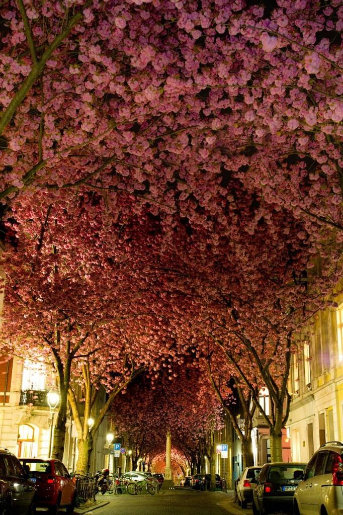 O stradă din Bonn şi multe flori