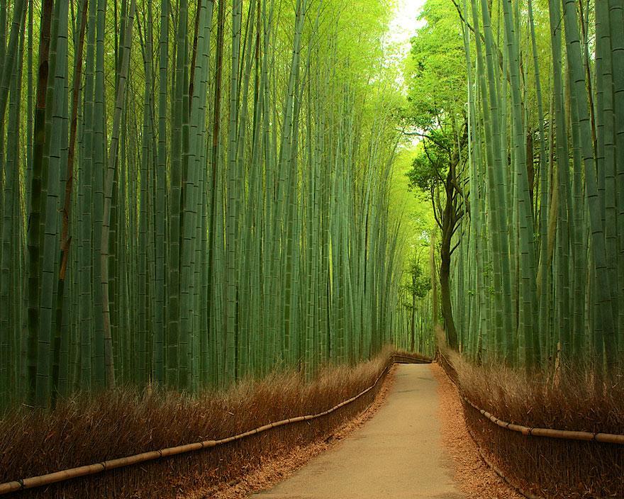Păduri de bambus în Japonia