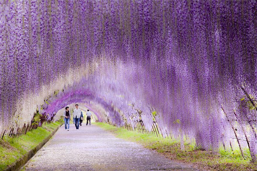 Un tunel de flori la celălalt capăt al lumii
