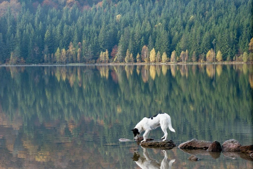 Chiar și animalele se bucură de puritatea lacului