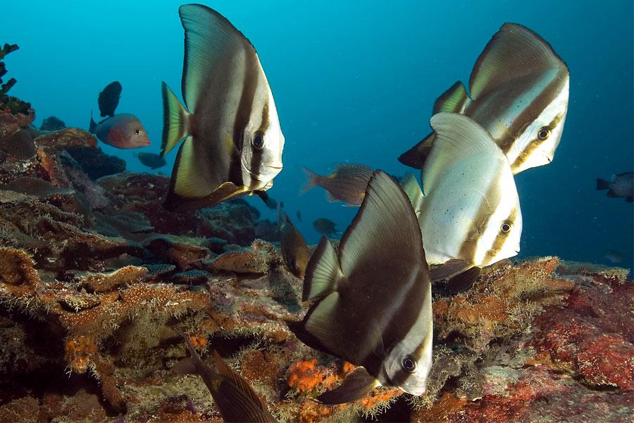 Lumea subacvatică este interesantă, dar mai ales inedită