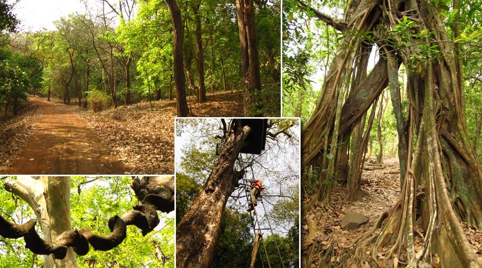 Rezervația naturală Cotigao din Goa, India