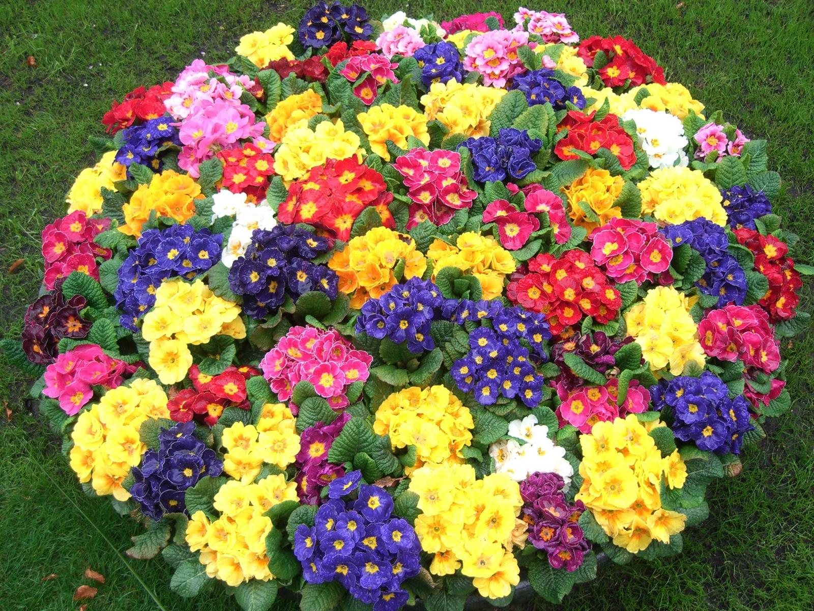 În Grădinile din Keukehof se regăsesc numeroase specii de flori