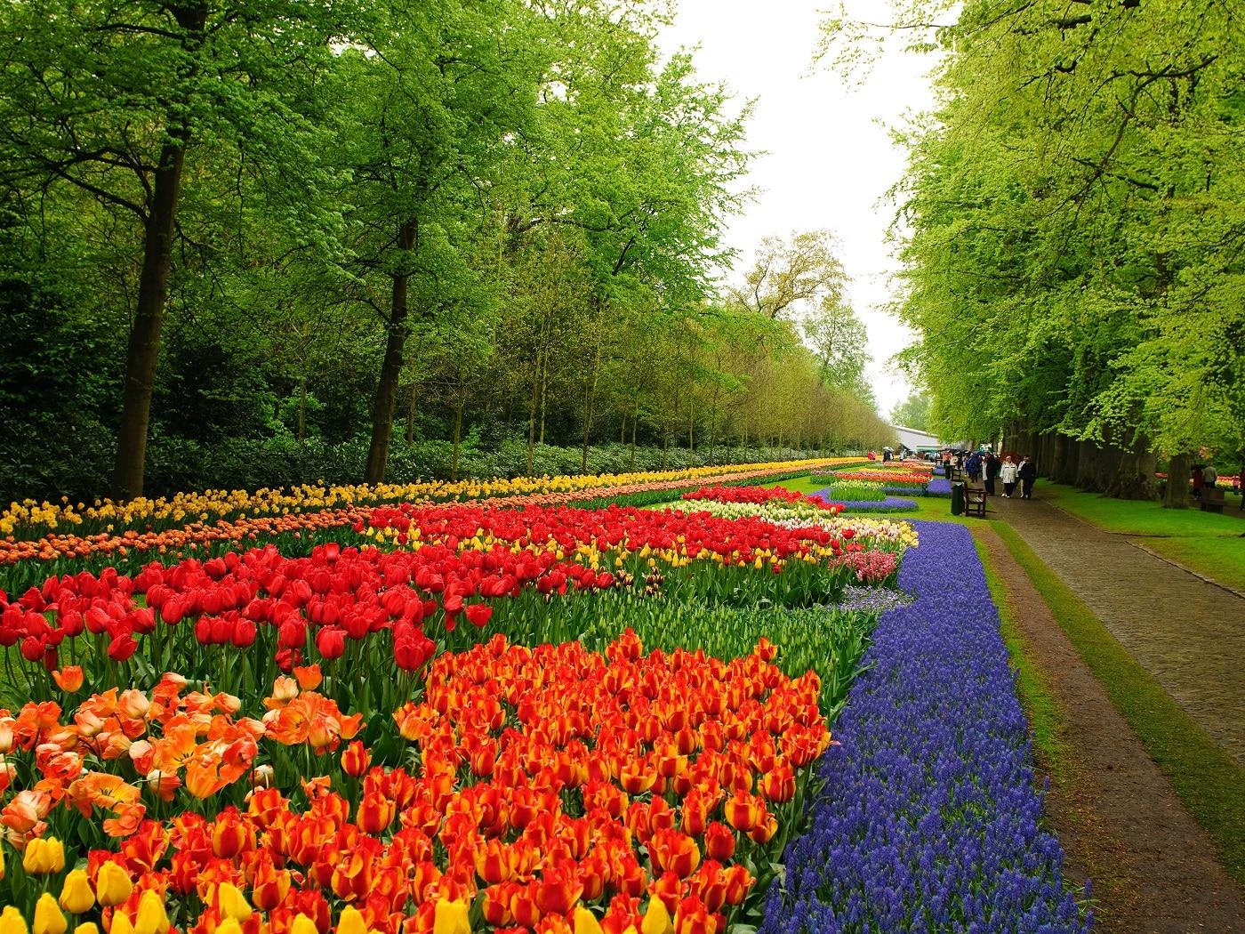 Turiștii adoră să se plimbe pe aleile cu flori