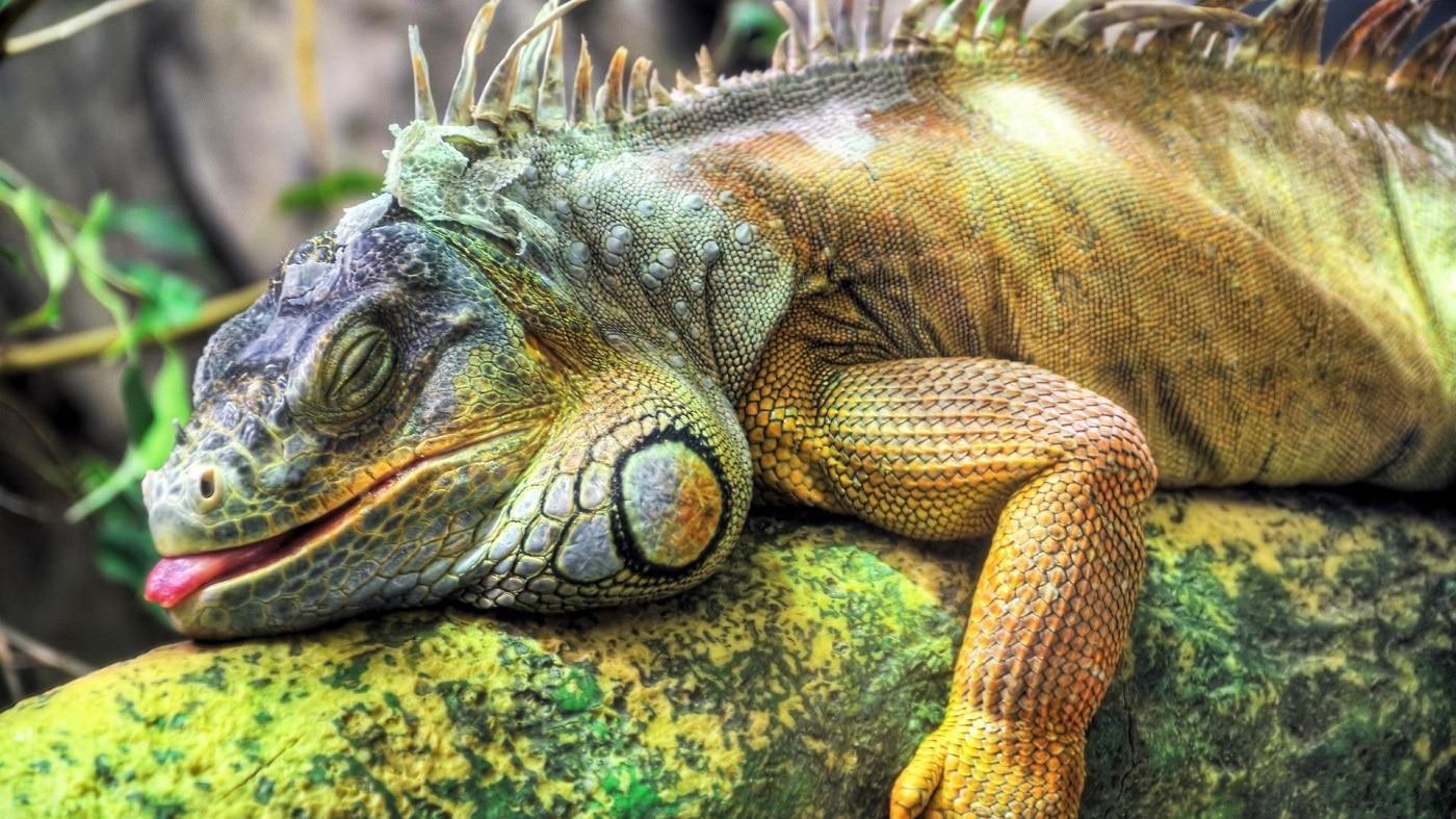 La grădina zoologică din Billund turiștii pot admira multe specii de animale interesante