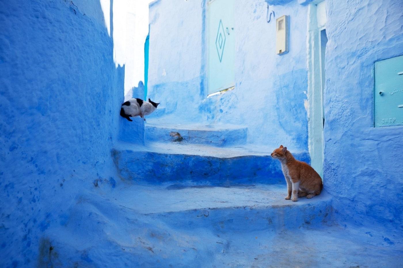 Pisicile se regăsesc la tot pasul în Orașul Albastru