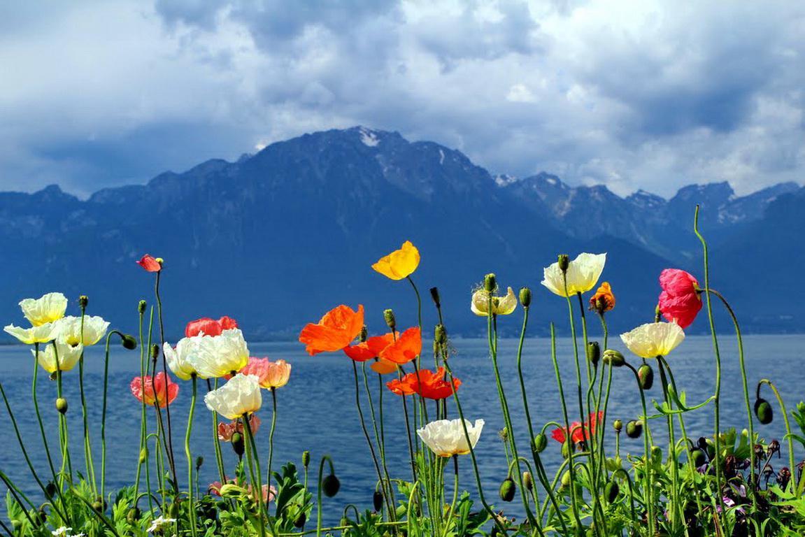 Lacul Geneva, splendid în orice anotimp