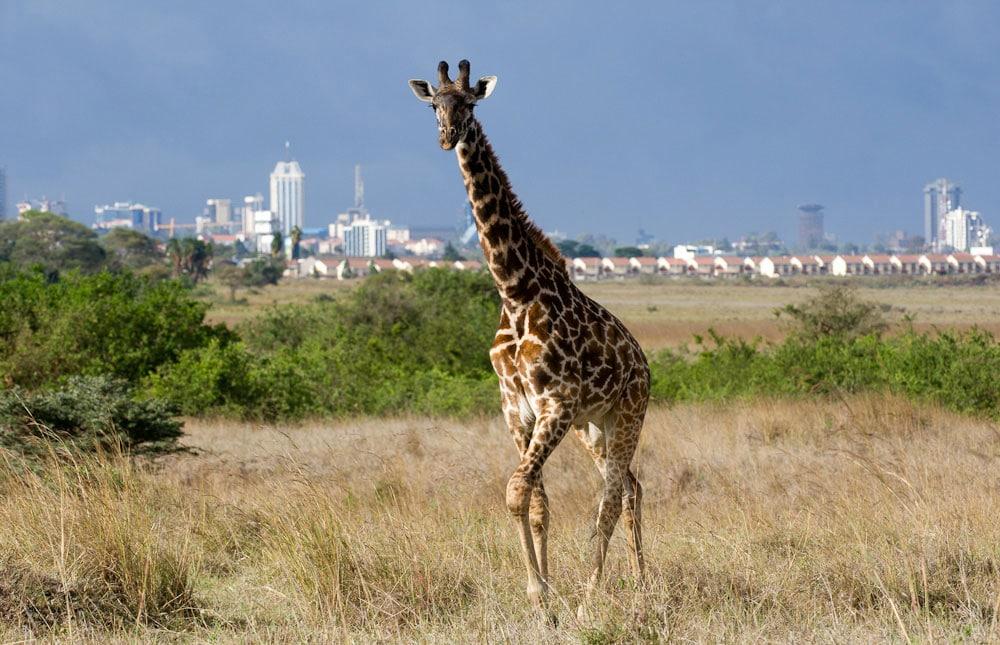 Parcul Naţional Nairobi