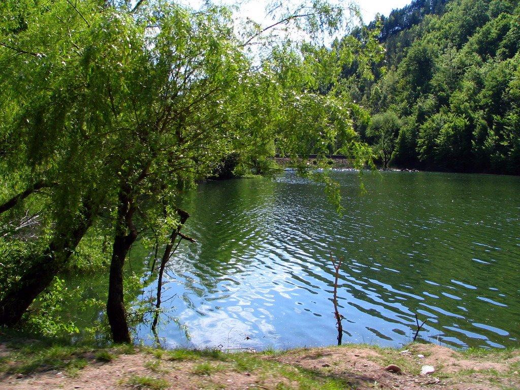 Pe luciul apelor se oglindesc pădurile din jur