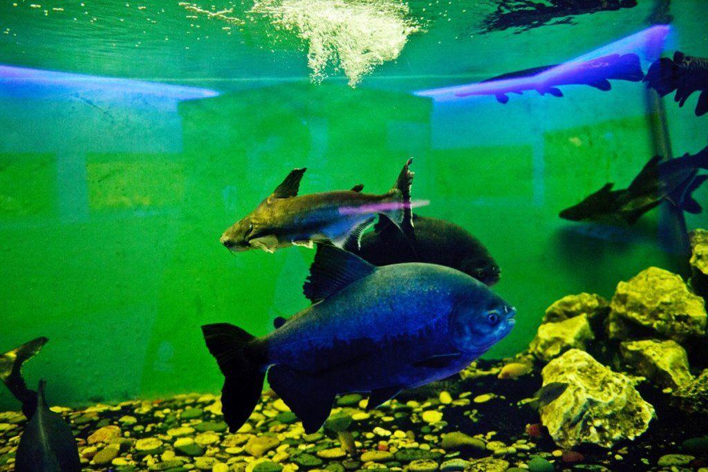 Specimene marine găzduite de Ocean Aquarium din Protaras