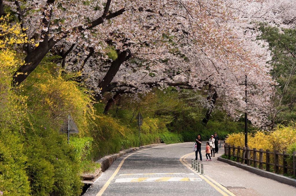Parcul Namsan, o încântare pentru turişti