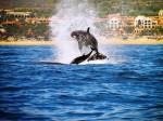 Specii maritime pot fi observate cu uşurinţă în valurile înspumate