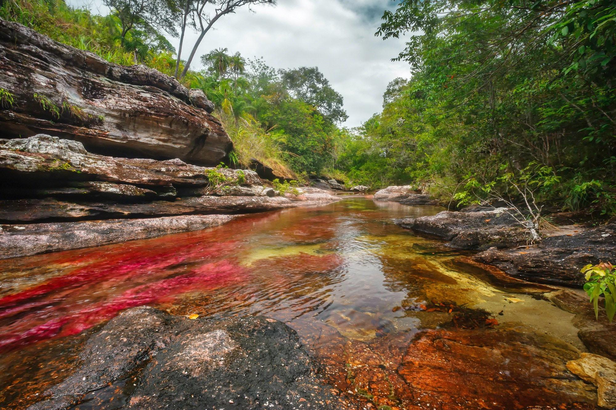 Râul Cano Cristales, cel mai colorat râu din lume