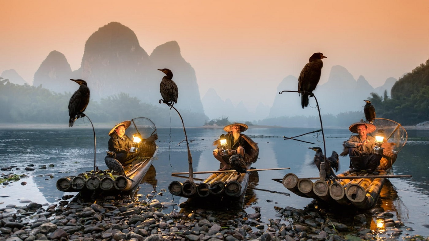 Cormoranii înfrumusețează întreaga regiune