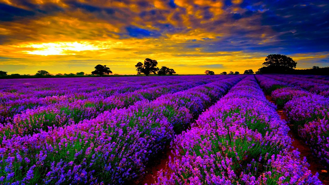 Provence, Franţa