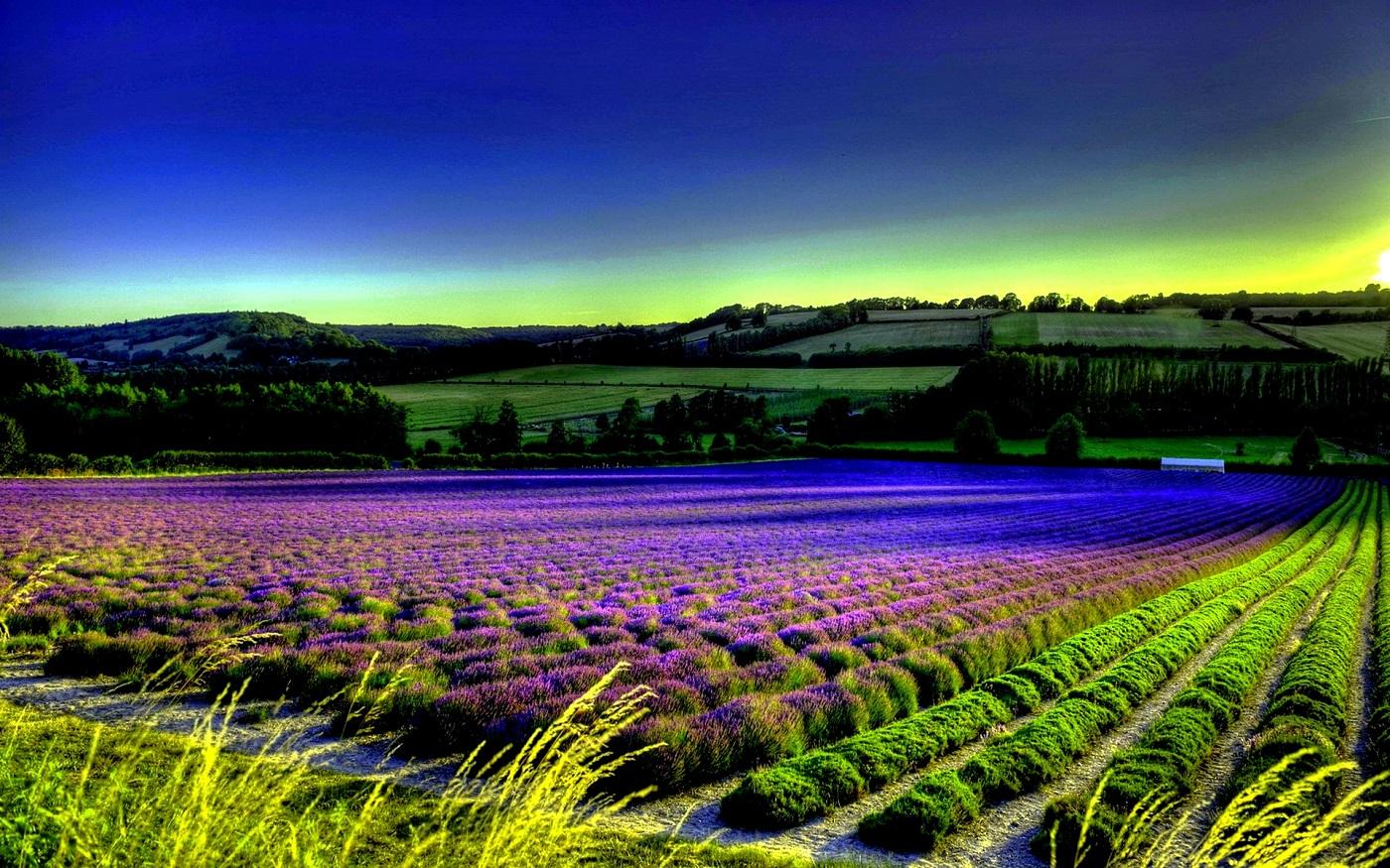 Provence, tărâm binecuvântat