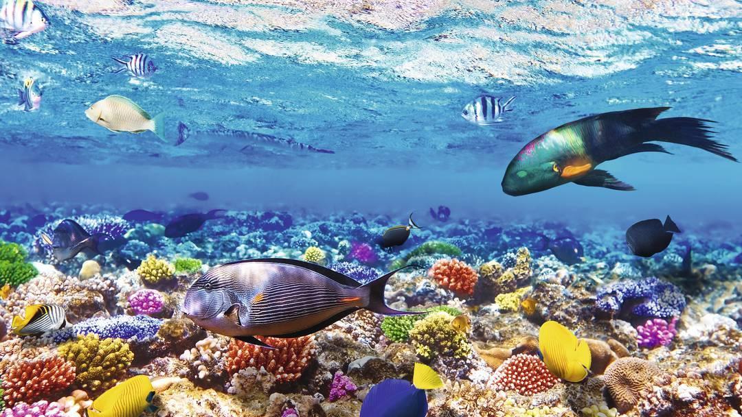Sesiunile de scufundări dezvăluie o lume fascinantă