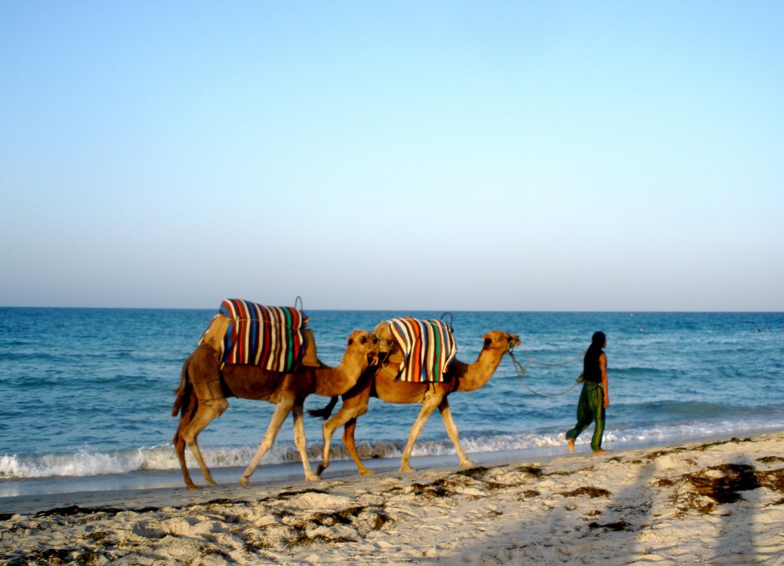 Cămile pe plajele din Tunis