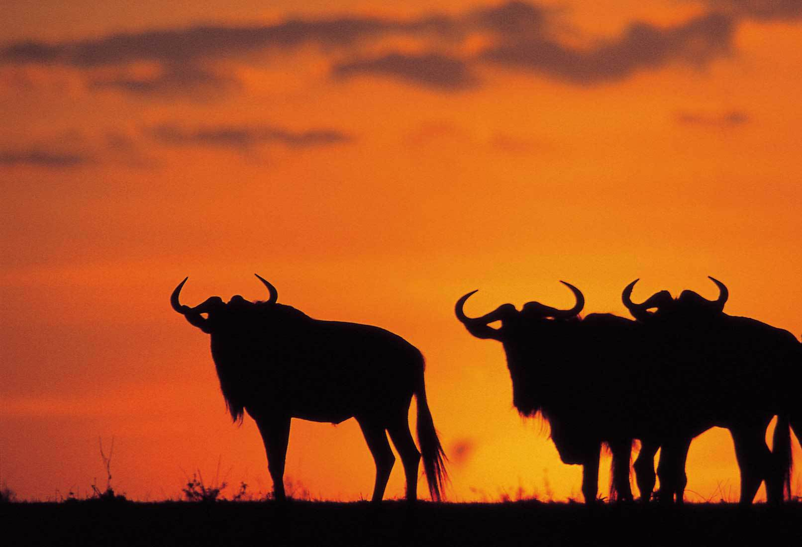 Cele mai rare animale pot fi admirate pe teritoriul parcului