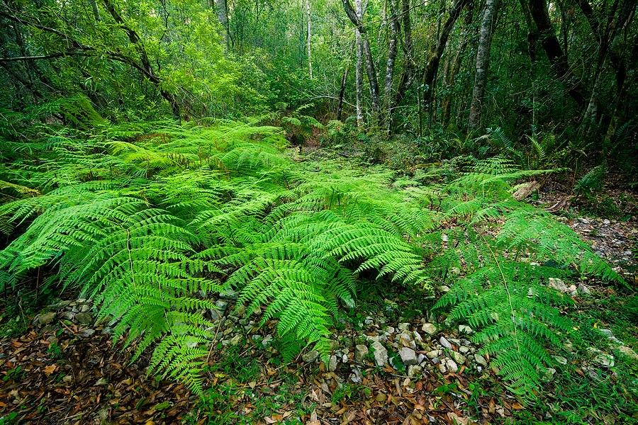 Pădurile umbroase sunt o încântare pentru vizitatori