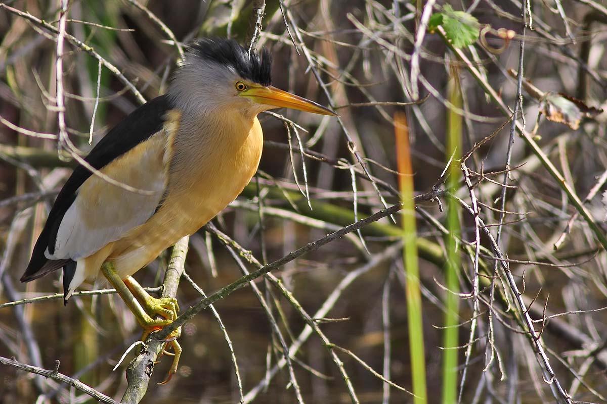 Specii de păsări rare însuflețesc întreaga zonă