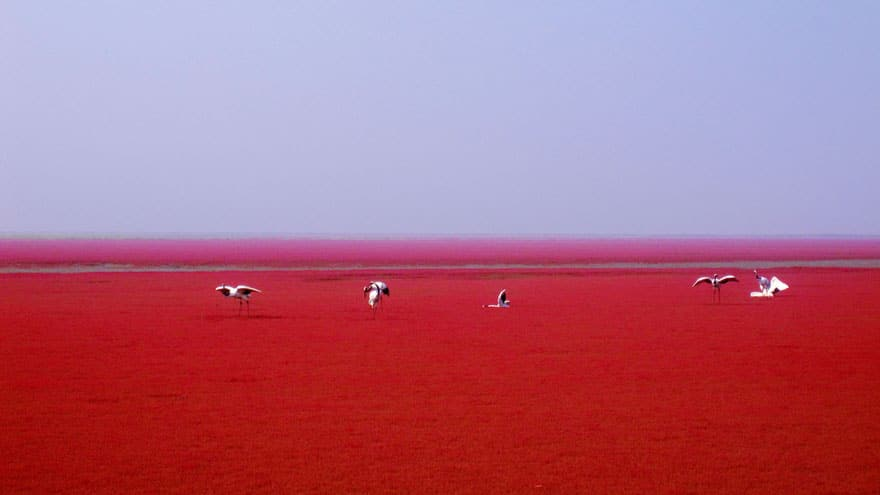 Algele roșii crează un cadru inedit!