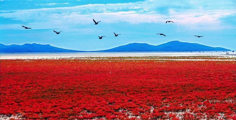 Sute de specii de păsări însuflețesc regiunea
