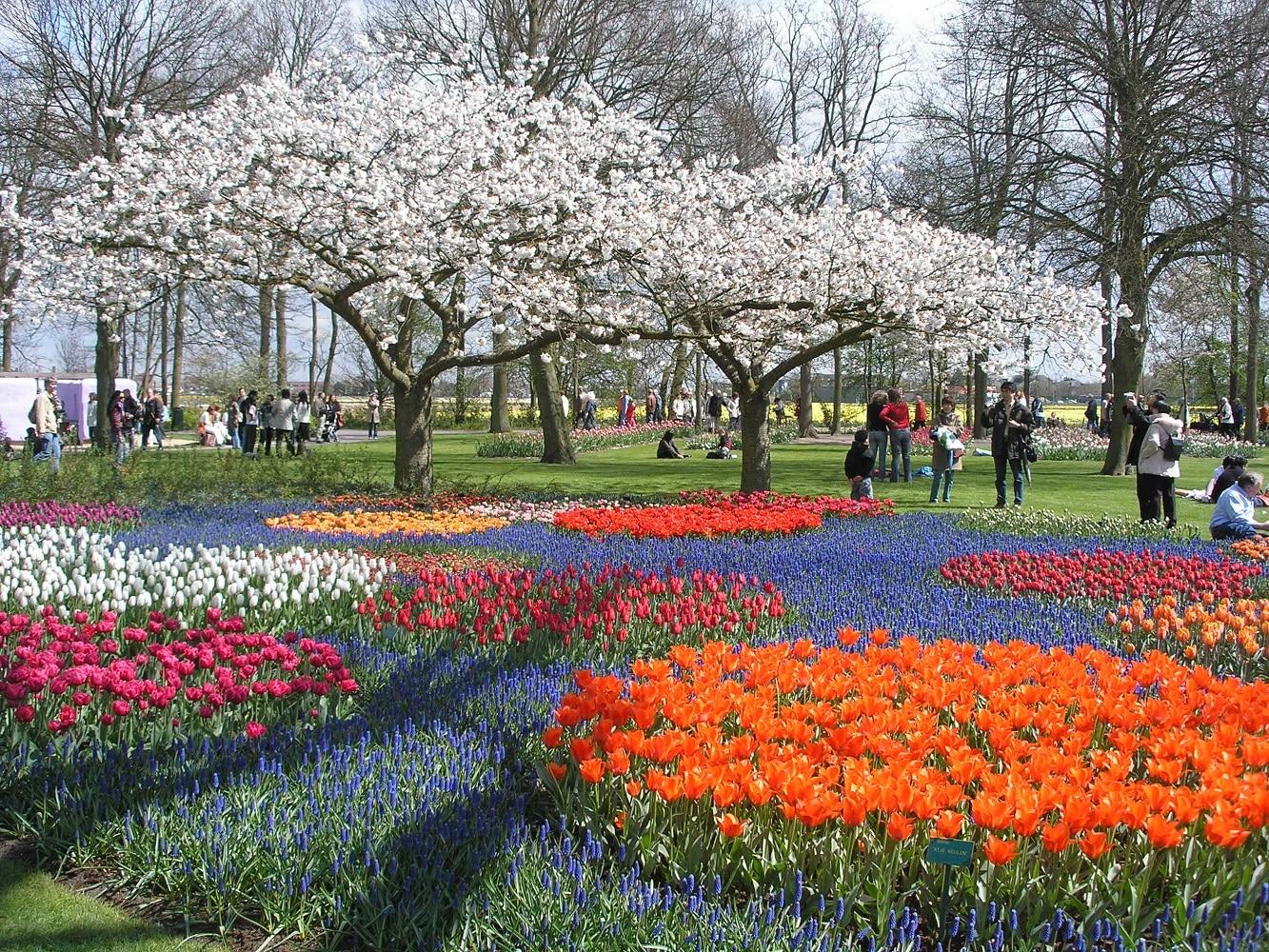 Keukenhof - Cea-mai-mare-grădina-de-flori-din-lume