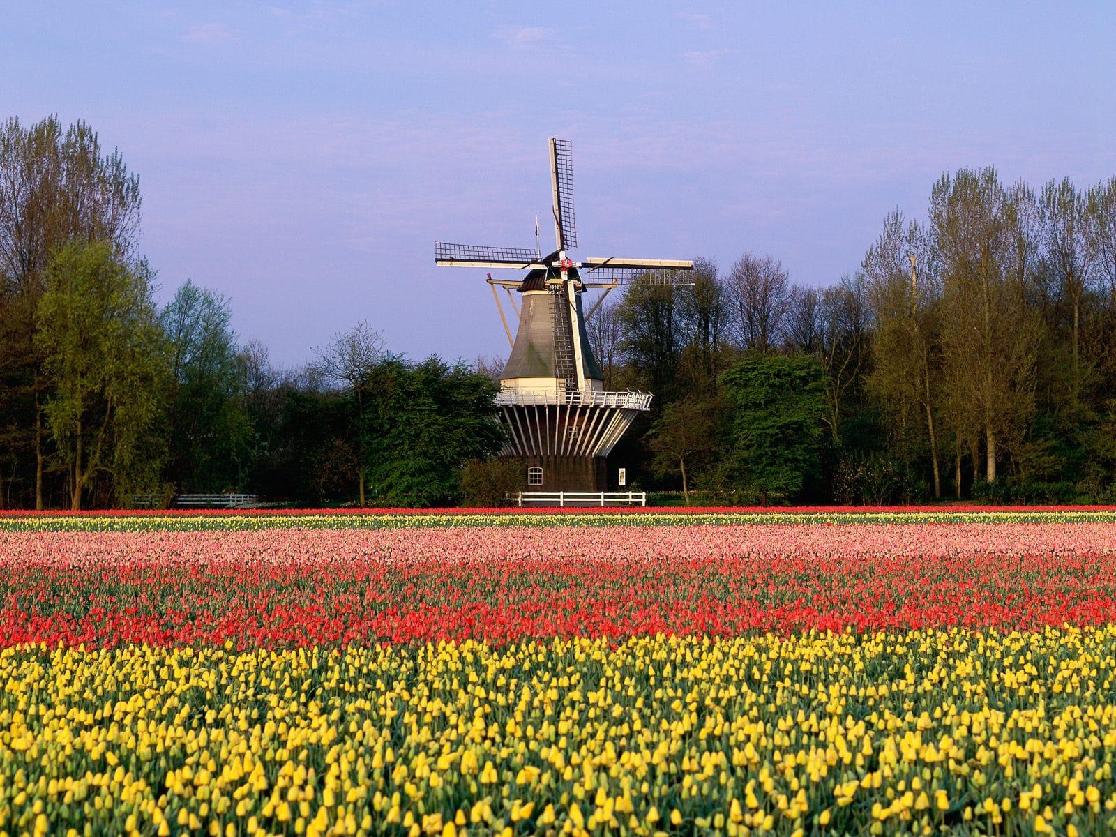 Moara de vânt tradițional olandeză din  Grădina Europei
