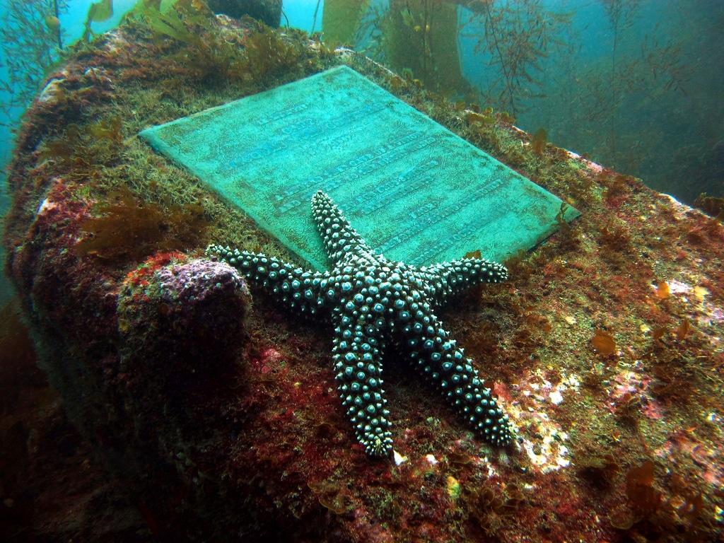 Sesiunile de scufundări dezvăluie imagini uimitoare