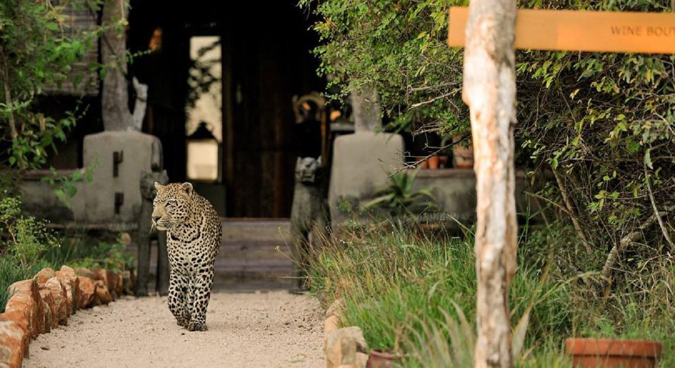Singita Boulders Lodge – bogăție în inima Africii