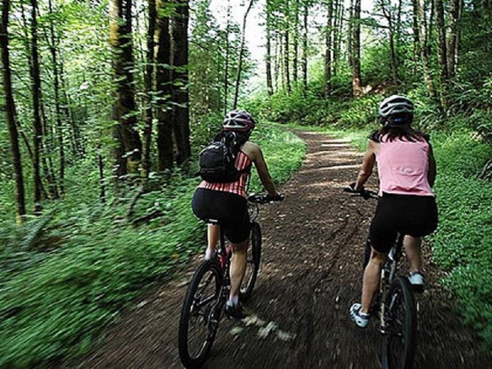 Pista de biciclete din Pădurea Ceala, Arad
