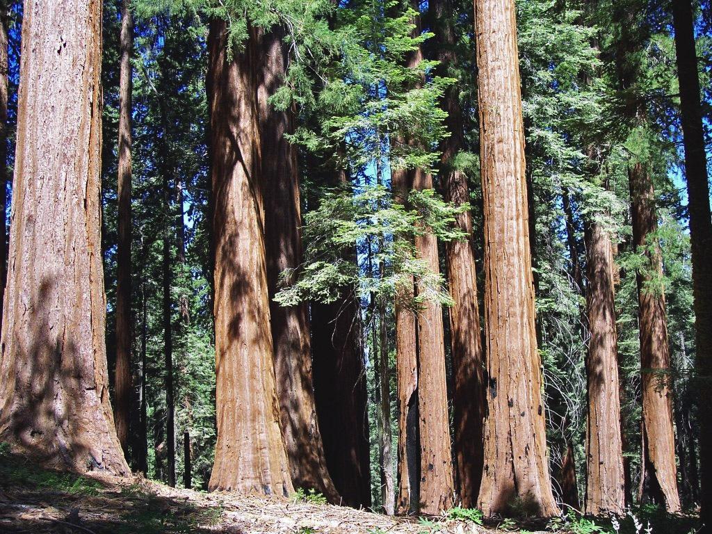 Arborii extrem de înalţi crează un cadru deosebit