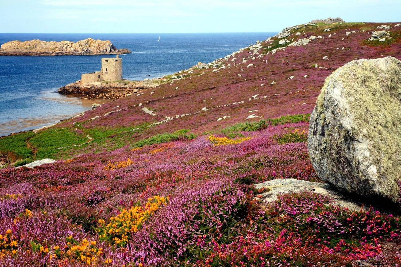 Cele mai frumoase specii de flori îmbracă terenul fertil al zonei