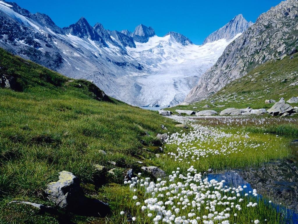 Diverse specii de plante rare pot fi admirate în staţiunea montană