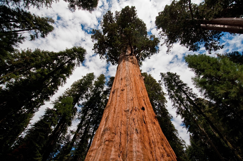 Monumentul Naţional Giant Sequoia, California