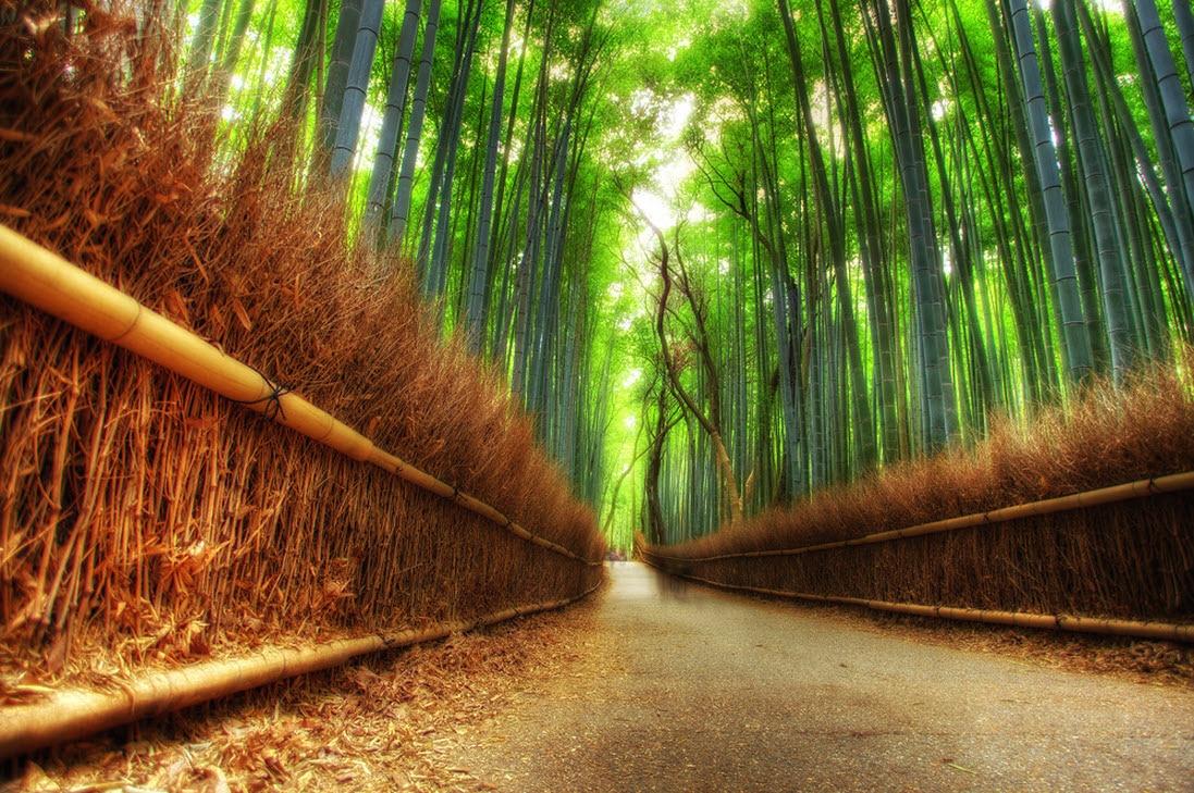 Pădurea japoneză este un loc perfect pentru plimbări în natură